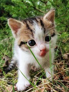 """An inquisitive kitten is the best reminder  of what youth is all about."" -- Anonymous"