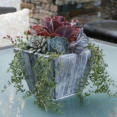 Mixed Echeverias make for a sweet mix in this wooden container.