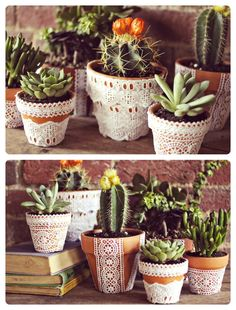 #cacti