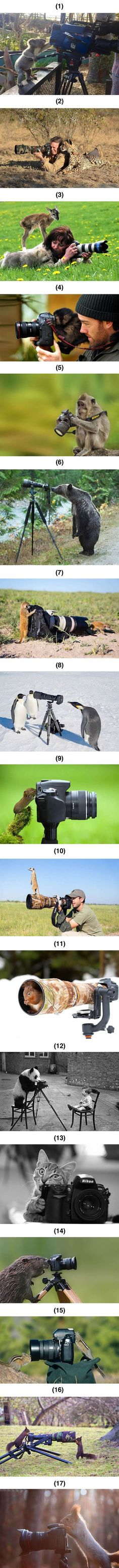 Animals with camera. Of COURSE the cat is eating it...: