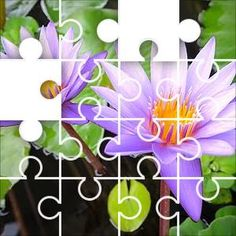 Nymphaeaceae Pair Jigsaw Puzzle, 67 Piece Classic. Nymphaeaceae, commonly called Water lilies are aquatic, rhizomatous herbs.