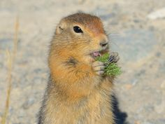 A Happy Gopher by Keith Williams on 500px
