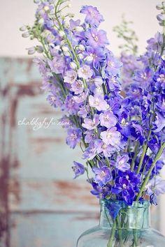 The truest blue flower in the world!  Delphinium!  Also comes in white.