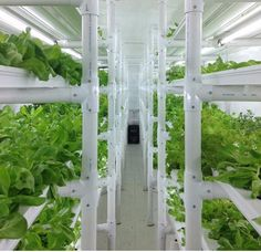 Shipping container hydroponic garden