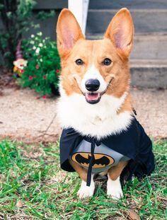 """""""I'm Batman...."""""""