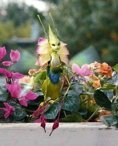 fairy flower sprite
