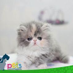 Buenas noches 🌝  #PetsWorldMagazine #RevistaDeMascotas #Panama #Mascotas #MascotasPanama #MascotasPty #PetsMagazine #Gatos #GatosPty #GatosPanama #MascotasPty #MascotasAdorables #SuperTiernos #PicOfTheDay #Cats #CatLover #CatOfTheDay #Cute