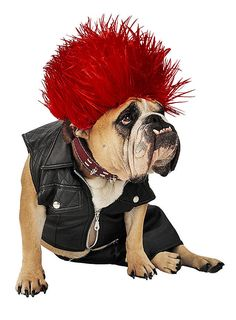 Punker Hundekostüm