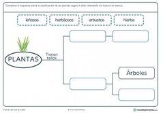 Ficha de plantas según su tallo para primaria