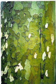 Bare Valour tree bark, Nice, France