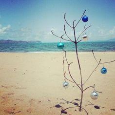 A tropical Christmas tree. Pallarenda Beach, Townsville.