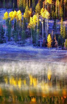 ✯ Fall Fog