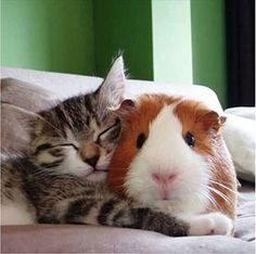 ... Unlikely Friendships Slide Show 5