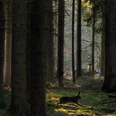 walks in woodland - Meeting the Prince of the Royal woods by B℮n, via Flickr