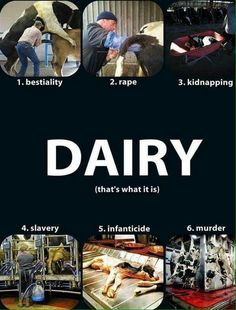 Dairy farming is based on the exploitation of female reproduction and the destruction of motherhood. Get the dairy facts. Vegan Facts, Vegan Memes, Vegan Quotes, Vegan Humor, Reasons To Be Vegan, Why Vegan, Stop Animal Cruelty, Vegan Animals, Think