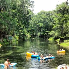 Ichetucknee River, Florida I went tubing there today & pushed my brother in 11 times!