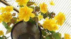 6 plantas que melhoram a qualidade do ar em residências