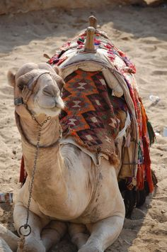 As a camel kneels before his master to have him remove his burden, so kneel and let the Master take your burden.  Corrie ten Boom