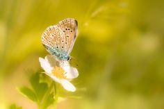 little blue by Rian Krenzer            www.facebook.com/riankrenzerphoto  for more.. :)sony a6000, vivitar 90/2.8 macro            Rian Krenzer: Photos                                 #nature #photography