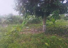 MPaniagua bienes raices: 0274001 Finca, Gandoca-Manzanillo, Limón, Costa Ri...