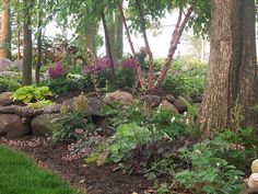 Wooded gardens, Shade Garden, Hostas, Heuchera