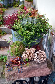 Courtyard Get on the tree trunk - a DIY and much more. Courtyard Get on the tree trunk – a DIY and much more. Leafy Plants, Exotic Plants, Exotic Flowers, Tropical Decor, Tropical Garden, Tropical Plants, Amazing Gardens, Beautiful Gardens, Garden Markers