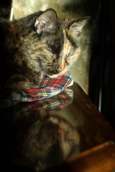 Beyond Food and Water, Loving Care for Your Senior Cat, part 2