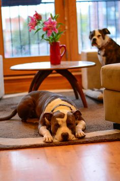 Easy Carpet Cleaning with Dogs
