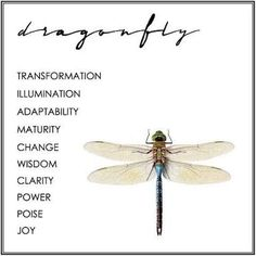 dragonfly meaning quotes Dragonfly Symbolism, Dragonfly Quotes, Dragonfly Art, Dragonfly Tattoo, Dragonfly Meaning Spiritual, Spiritual Meaning, Dragonfly Necklace, Spiritual Enlightenment, See Tattoo