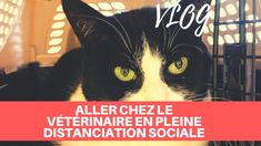 ALLER CHEZ LE VÉTÉRINAIRE EN PLEINE DISTANCIATION SOCIALE - Vlog Movie Posters, Movies, Films, Film, Movie, Movie Quotes, Film Posters, Billboard