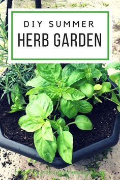 Summer is just around the corner which means so is planting season! Check out this super simple DIY herb garden tutorial so you too can enjoy the delicious flavour of fresh and healthy herbs all summer long.