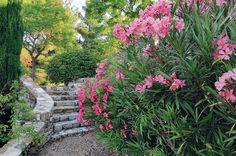 Avec la mer au loin qui rend l'hiver plus doux, ce jardin en terrasses peuplé de végétaux aromatiques et persistants est agréable en toutes saisons.