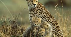 Wildlife and Central India Tour - Custom made Private Guided India Tour Packages - Quality and Value for Money Holidays in India by Indus Trips - http://www.industrips.com/wildlife-central-india-tour/ Mother And Baby Animals, India Tour, Love Pictures, India Travel, Tour Guide, Trips, Wildlife, Viajes, Travel