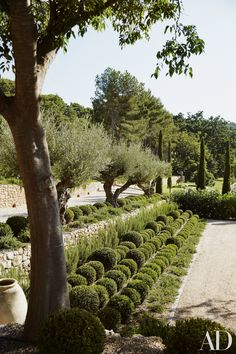 Terraced rows of boxwood spheres border the entry court | archdigest.com