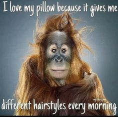 Humor Discover AmO Images Funny Monkey Portraits by Jill Greenberg. Have a Good Laugh! Funny Animal Faces Funny Animal Pictures Funny Animals Hilarious Pictures Funny Ideas The Animals Regard Animal Jill Greenberg Photo Humour Funny Good Morning Memes, Good Morning Funny Pictures, Morning Humor, Saturday Morning, Funny Weekend, Weekend Quotes, Funny Friday, Time Quotes, Funny Animal Faces