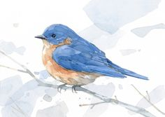 Eastern Bluebird Bluebird art print from watercolor painting. Beautifully reproduced on a heavyweight art paper with a subtle texture that has the feel of a smooth watercolor paper. Matted in an archival white mat, it is ready to stick in a frame or give as a gift!.