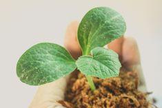 maadoitus_artikkelikuva Plant Leaves, Plants, Plant, Planets