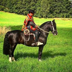 Equestrian Equipments Tips Pony Breeds, Horse Breeds, Rodeo, Horse Armor, Conquistador, Equestrian Style, Pyrography, Beautiful Horses, South America