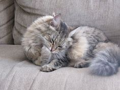 6 Signs Your Cat Is Stressed Out   iHeartCats.com - Because Every Cat Matters ™