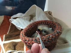 Use your knitting and crocheting skills to help orphaned baby birds take flight! Join the Baby Bird Nest Craft-Along today!