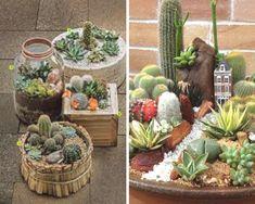Como cuidar de cactos Types Of Succulents Plants, Planting Succulents, Cactus Plants, Garden, Blog, Succulents Garden, Beautiful Gardens, Small Gardens, Types Of Succulents