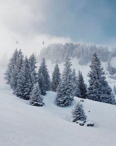 Rinderberg Ronda: Skisafari im Simmental - Schweizer Winterausflug Safari, Snow Forest, Wonderland, Snow Days, Journey, Weather, Mountains, Landscape, Switzerland