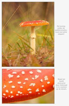 Alles over fotograferen van de herfst.