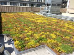 Mead Building. Portland Oregon. Plug and Play – Superlightweight Green Roof – |  Green Living Technologies