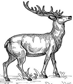 free Caribou coloring page embroidery patterns Pinterest