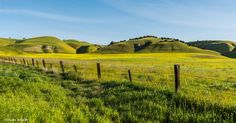 Let me dream of this all day Central California, Vineyard, Let It Be, Photography, Outdoor, Outdoors, Photograph, Vine Yard, Fotografie
