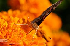 butterfly 12 by palabra