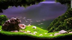 Aquascaping requires careful timing. Different plants come into bloom at different times, so designers must plan their tanks well in advance...