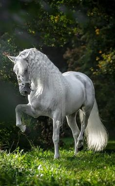 Beautiful Horse, what dreams of made of..