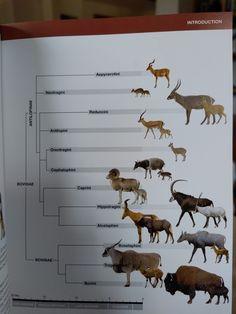 Animals Planet, Moose Art